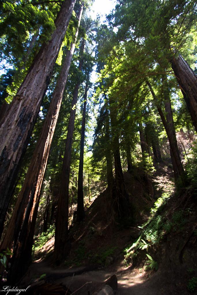 Pfeiffer Big Sur State Park.jpg