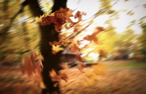 Autumn leaves fly