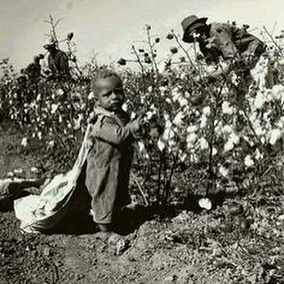 """Picking cotton in a 6 foot sack. My grandfather's sister, """"Aunt Lady,"""" told me one of the family's main reason to leave South Carolina was to do something other than pick cotton. They moved to Florida c. 1920. #agriculture #cotton #childlabour #legacyofsl"""
