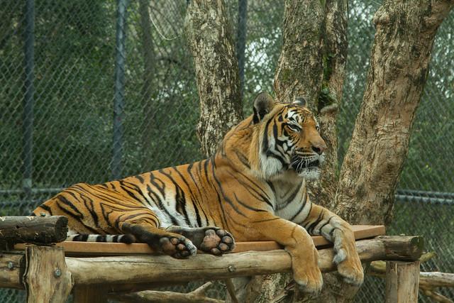 27482820890 e47548ddbb z Birmingham Zoo