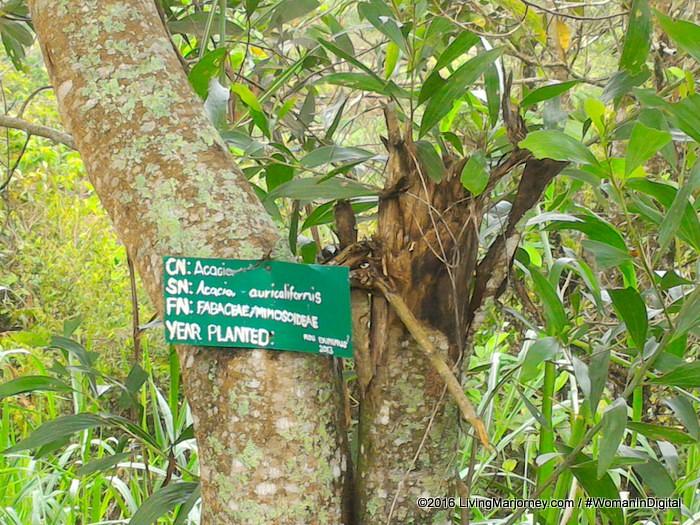LivingMarjorney-Binahon-Agroforestry-Farm-Bukidnon (67)