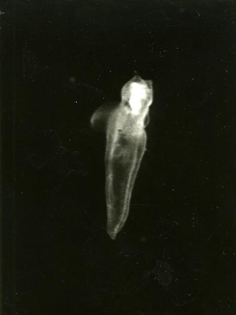 Мыс Картеш аквариум светящийся хрущ