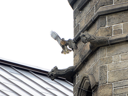 Cathedral RT Fledge 1 - 9279