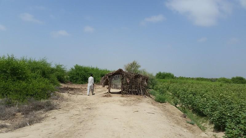 Extreme Off Road To Pir Bhambol Balochistan On August 12, 2016 - 29206227802 724071bbd5 c