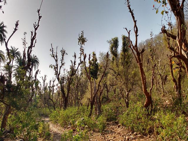 घेवर गाँव के हरे-भरे जंगल