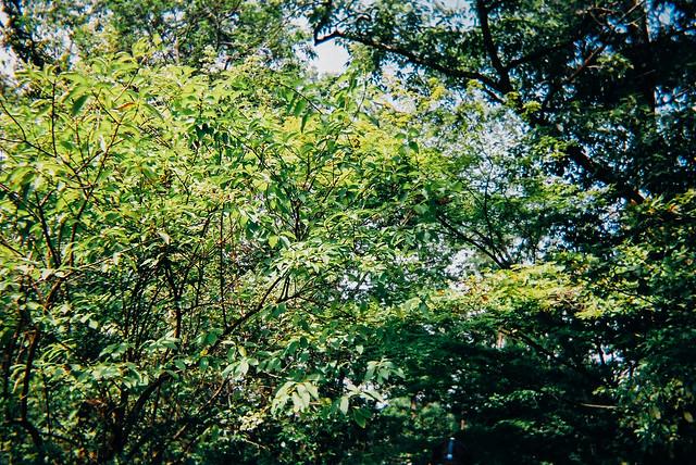 MeijimuraFilm_01