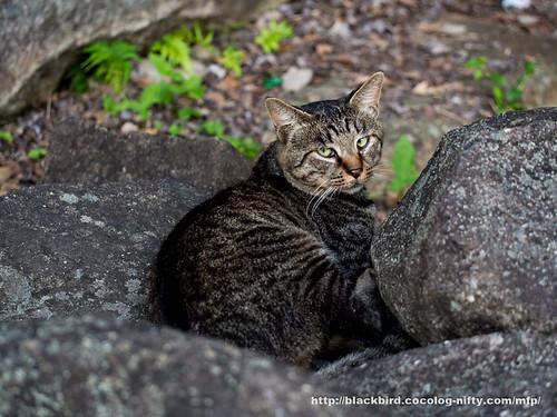 Cat #04