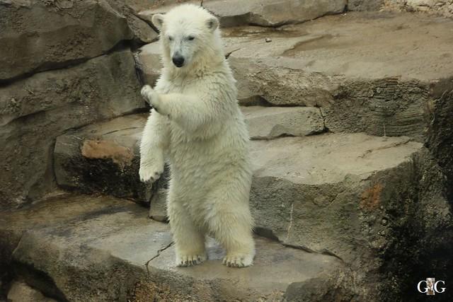 Besuch Zoo am Meer 26.06.2016102