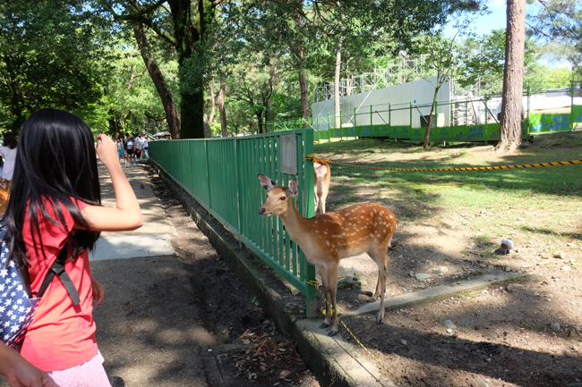 how to get to nara deer park