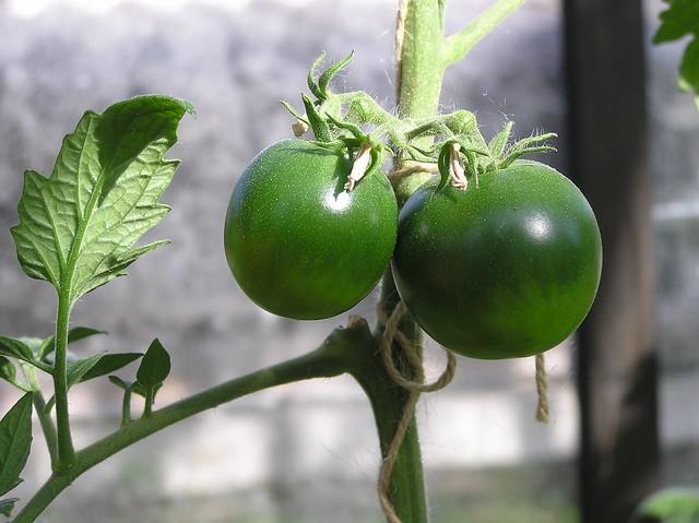 Tomato 'Kumato'