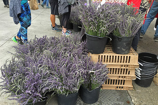 Eat Well Farms - Fresh lavenders