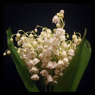 Lily of the valley bouquet, for #365days project, 135/365