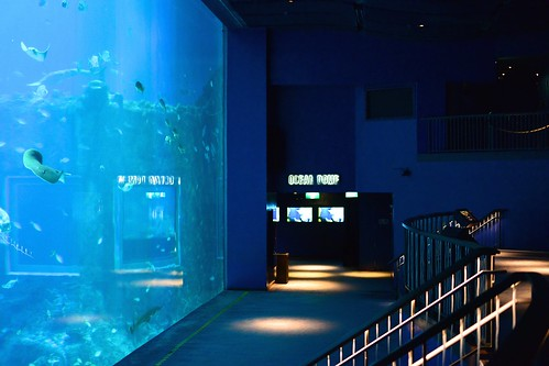 Open Ocean RWS SEA Aquarium