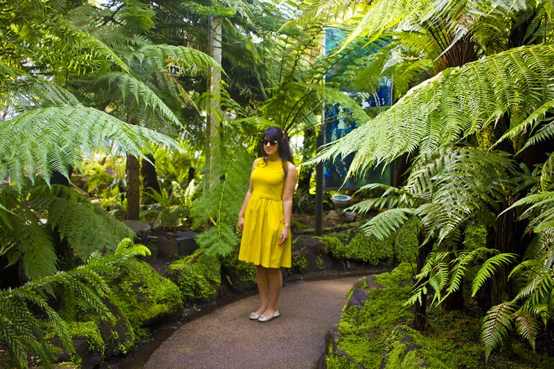 kibble palace, yellow dress in kibble palace, glasgow botanical gardens, glasgow kibble palace, glasgow botanical gardens kibble palace, yellow, yellow dress. yellow fifties dress, vintage, plants, ferns, foliage, tropical, fifties, vintage yellow dress,