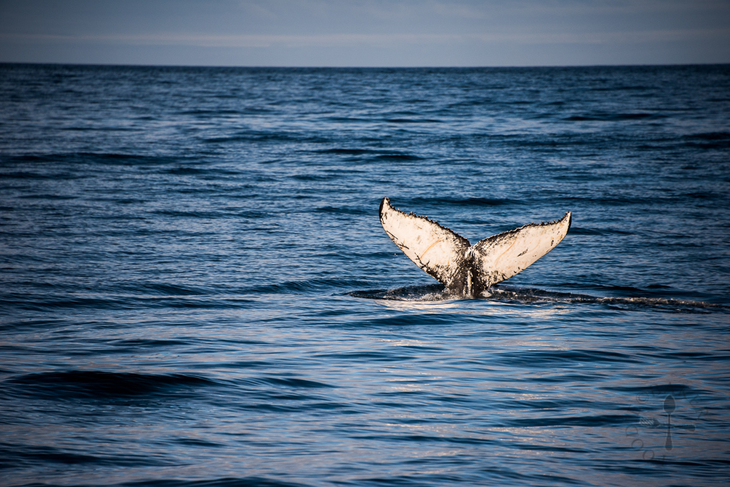 Dolphin Watching Tours North Carolina