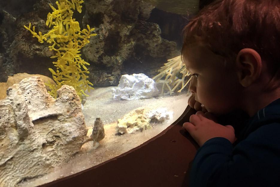 101615_aquarium16