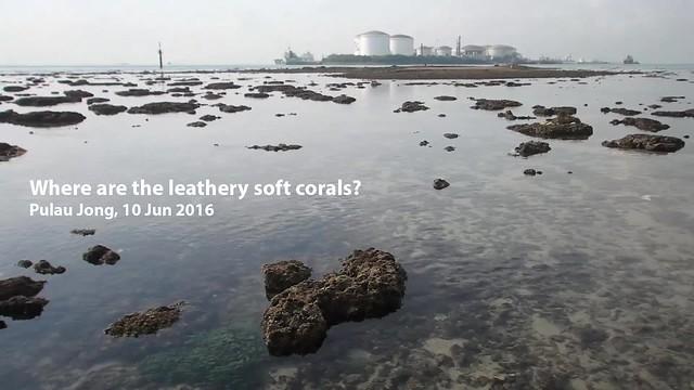 Mass coral bleaching at Pulau Jong, 10 Jun 2016