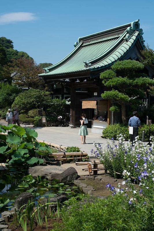 Hase Temple, Kamakura 鎌倉 長谷寺