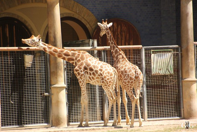 Sonntags-Besuch Zoo Berlin 03.07.201648