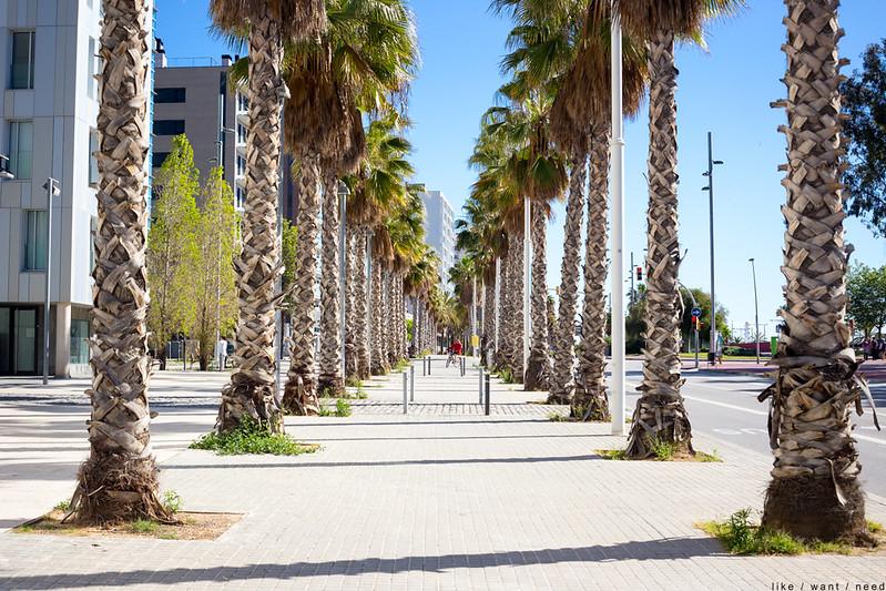 Palm Trees, Passeig de Calvell