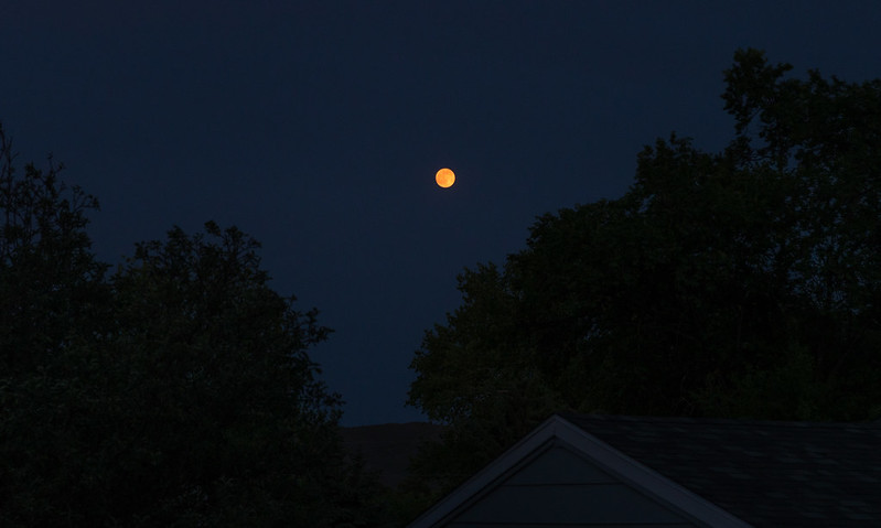 Wildfire Moon