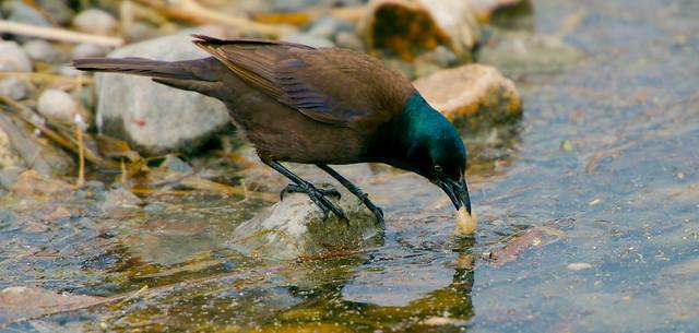 Birds-B_18