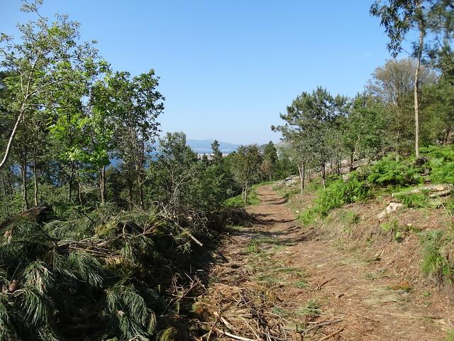 Camino en la Ruta da Arnela