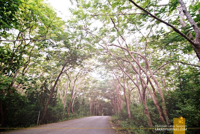 Salagdoong Beach Road
