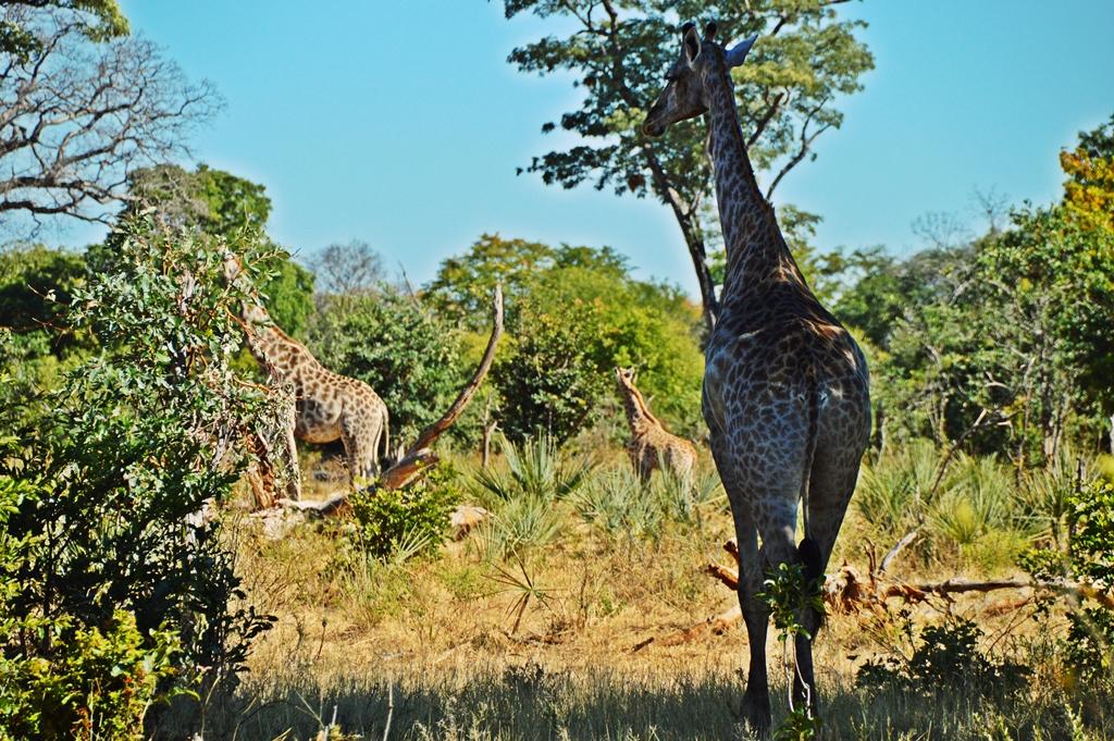 safari61