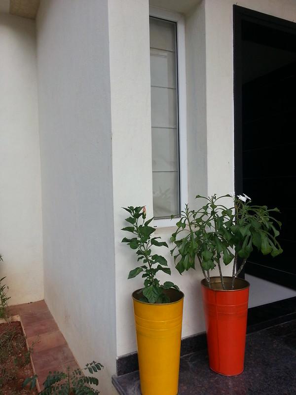 Paint your Planters