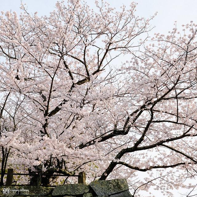 北九州之春 | 21