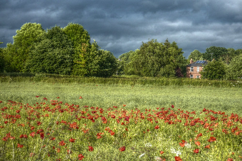 Poppies near Hartlebury with house
