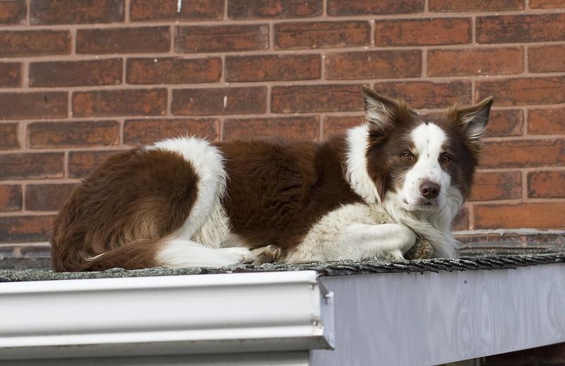 roof pooch