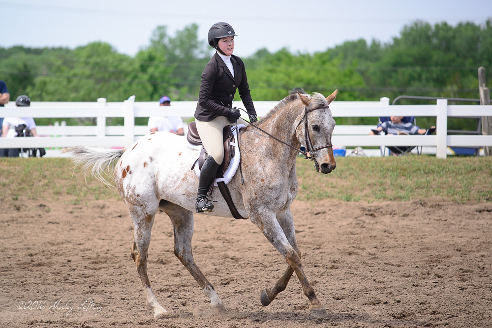 Sunrise Farms Horse Show June 2016