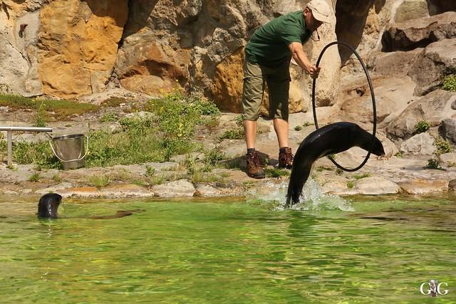 Sonntags-Besuch Zoo Berlin 19.06.201633
