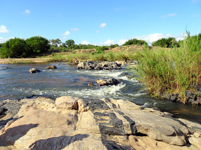 Lion Sands Safari Day 3- Sabie River