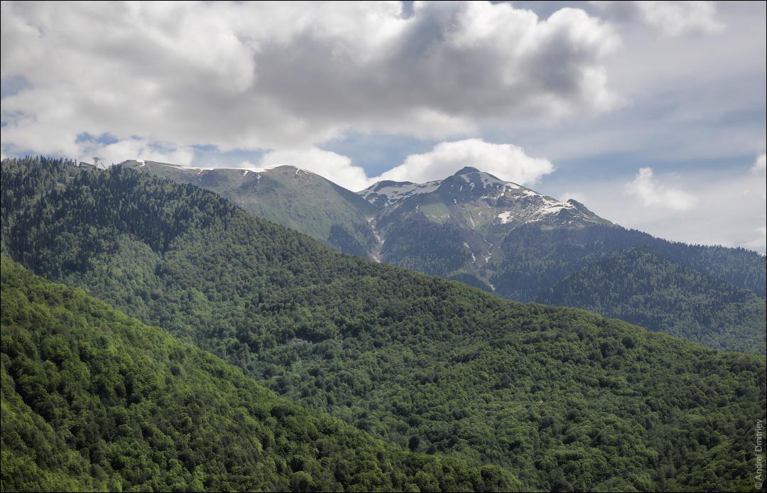 Горы, покрытые лесом