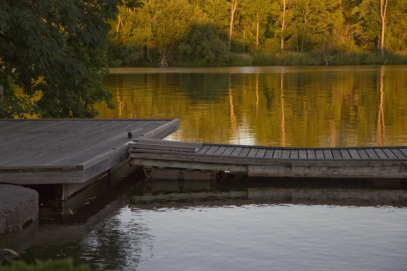 evening dock with mink