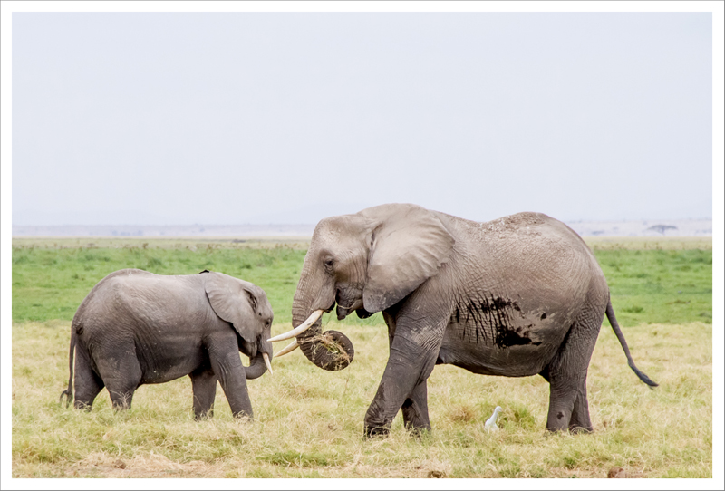 Amboseli-59