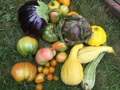 harvest 8-13 IMG_7259