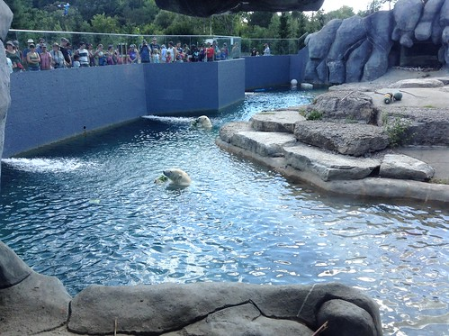 Polar Bear, Toronto Zoo