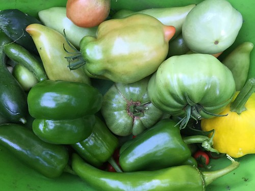 harvest IMG_7730