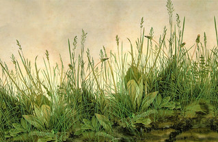 (Computer wallpaper 1655x1078) Durer 'Great Piece of Turf' 1503 | by Plum leaves