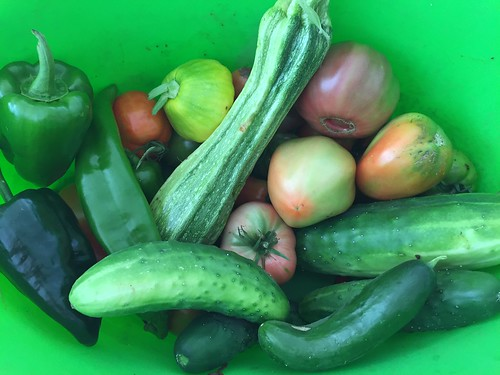 harvest 8-25 IMG_7518