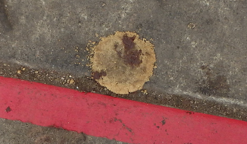flattened cookie on the pavement