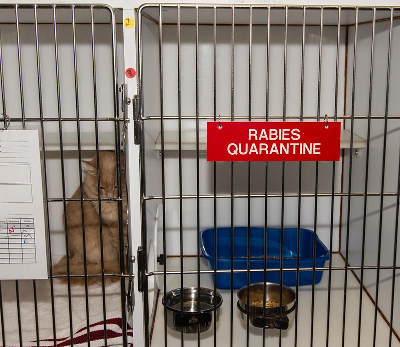 Rabies Quarantine