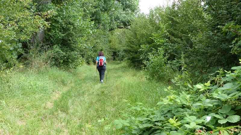 An der Selz zwischen Framersheim und Gau-Köngernheim