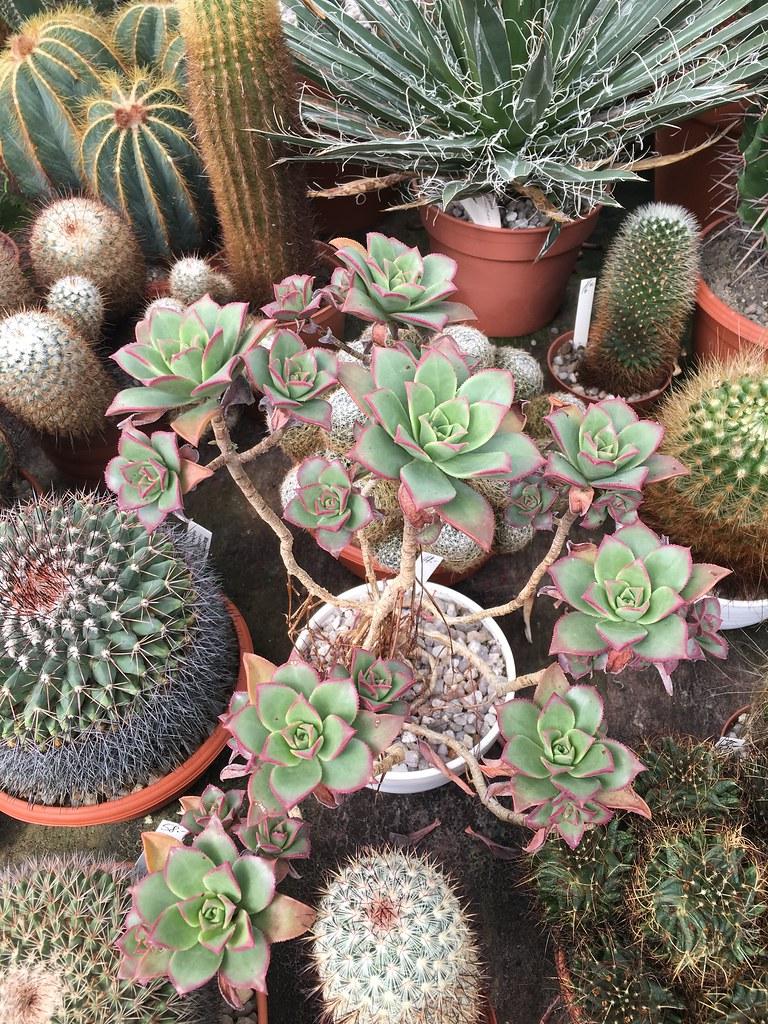Ha-Ka-Flor - cactus et plantes grasses 28107014490_5e1f73ae02_b