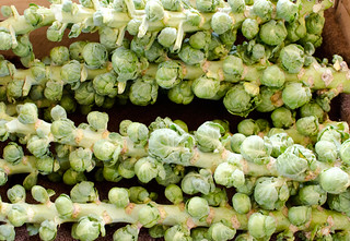 brussels sprouts on the stalk | by h-bomb
