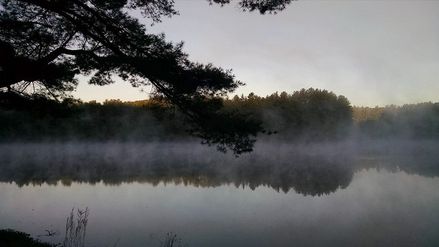 Foggy Ride2